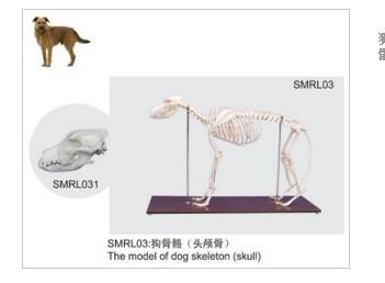 犬头骨解剖结构图片