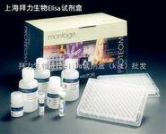 HRCEC(人視網膜微血管內皮細胞)