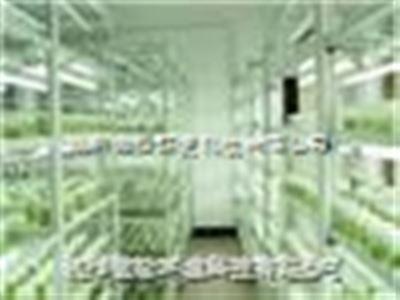 定制组织培养室