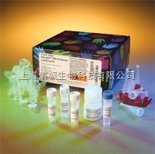 小鼠α-酮戊二酸脱氢酶复合体(α-OGDC) ELISA试剂盒,顺丰包邮