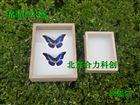 实木刷漆标本盒    昆虫标本盒 可定做