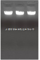 50次血液基因组柱式小量提取试剂盒