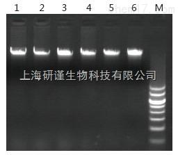 海洋动物基因组DNA提取试剂盒