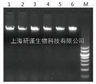 50次海洋动物基因组DNA提取试剂盒