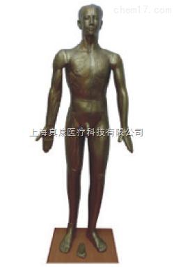 铜人针灸模型(pvc玻璃钢树脂材质)