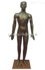 170cm铜色铜人针灸模型(pvc玻璃钢树脂材质)