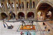 伦敦自然历史博物馆:蓝鲸骨架3D扫描