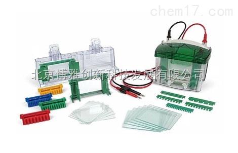 Bio-Rad Mini-PROTEAN® Tetra 電泳槽