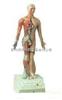 高85cm电动语言十四电动针灸模型