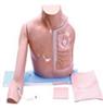 KAH-JZ静脉介入操作模型(带手臂