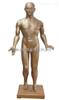 全皮肤铜人针灸模型 (玻璃钢材质)