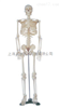 ZK-XC102 /85CM人体骨骼模型