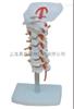 ZK-XC133颈椎带颈动脉模型(人体骨骼)