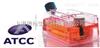 ATCC细胞